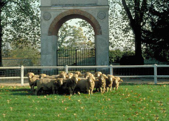 Visite de la Bergerie Nationale de Rambouillet