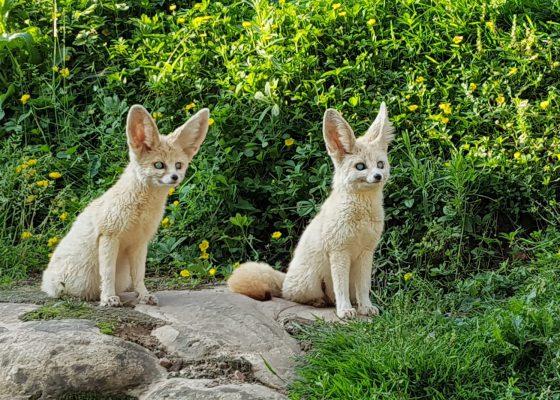DECOUVERTE DU SEINOSCOPE & LES JARDINS ANIMALIERS de BIOTROPICA